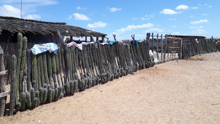 Showing Cactus Fence with clothes on top